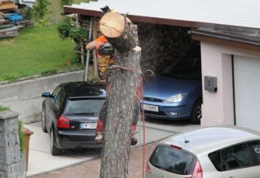 baumschitt arzbergstr. 2014-10